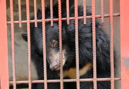 3 bile bear rescue - Vui, Nui, An