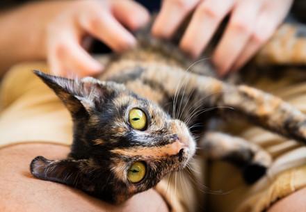 Kitten Roxy