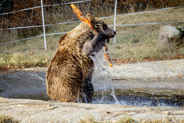 Теди играе във водата