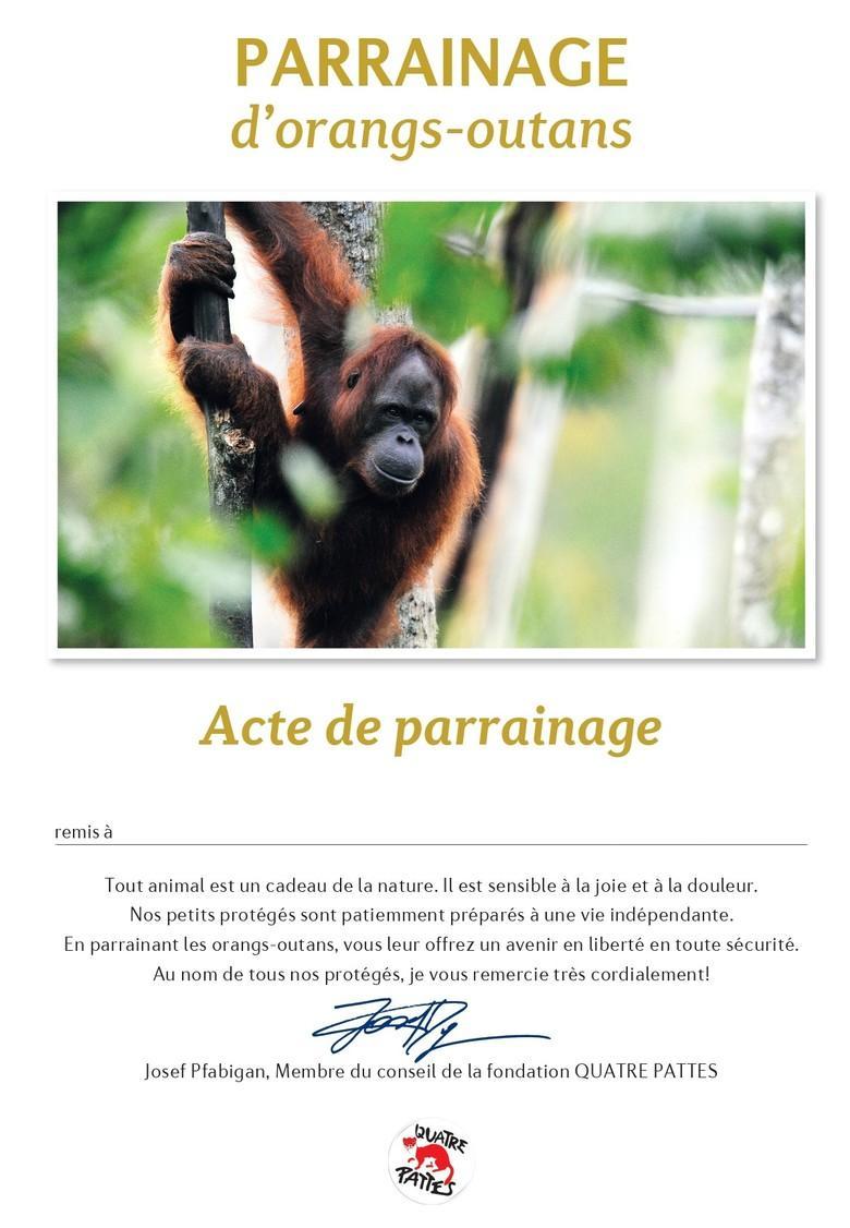 Certificat de parrainage des orangs-outans