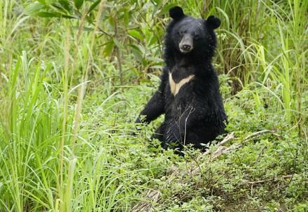 Bear Mui BEAR SANCTUARY Ninh Binh