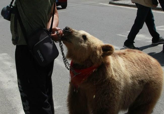 Bear Jeta before we rescued her