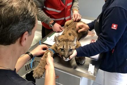 Medische zorg big cats