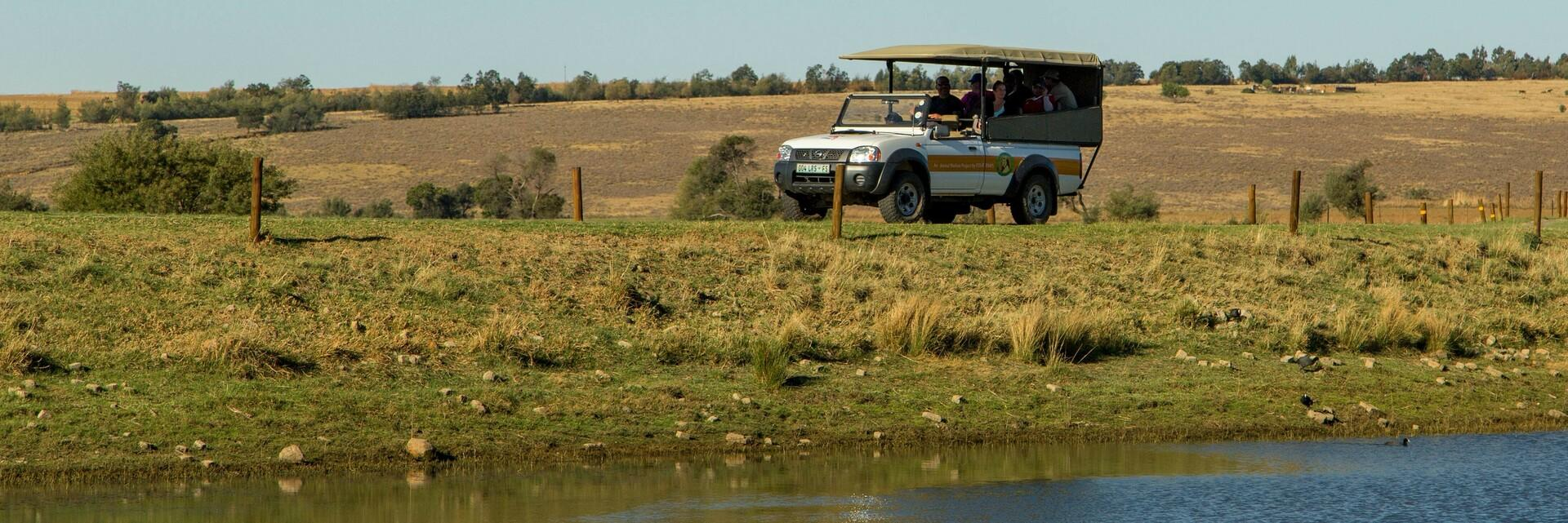 Guests on a game drive
