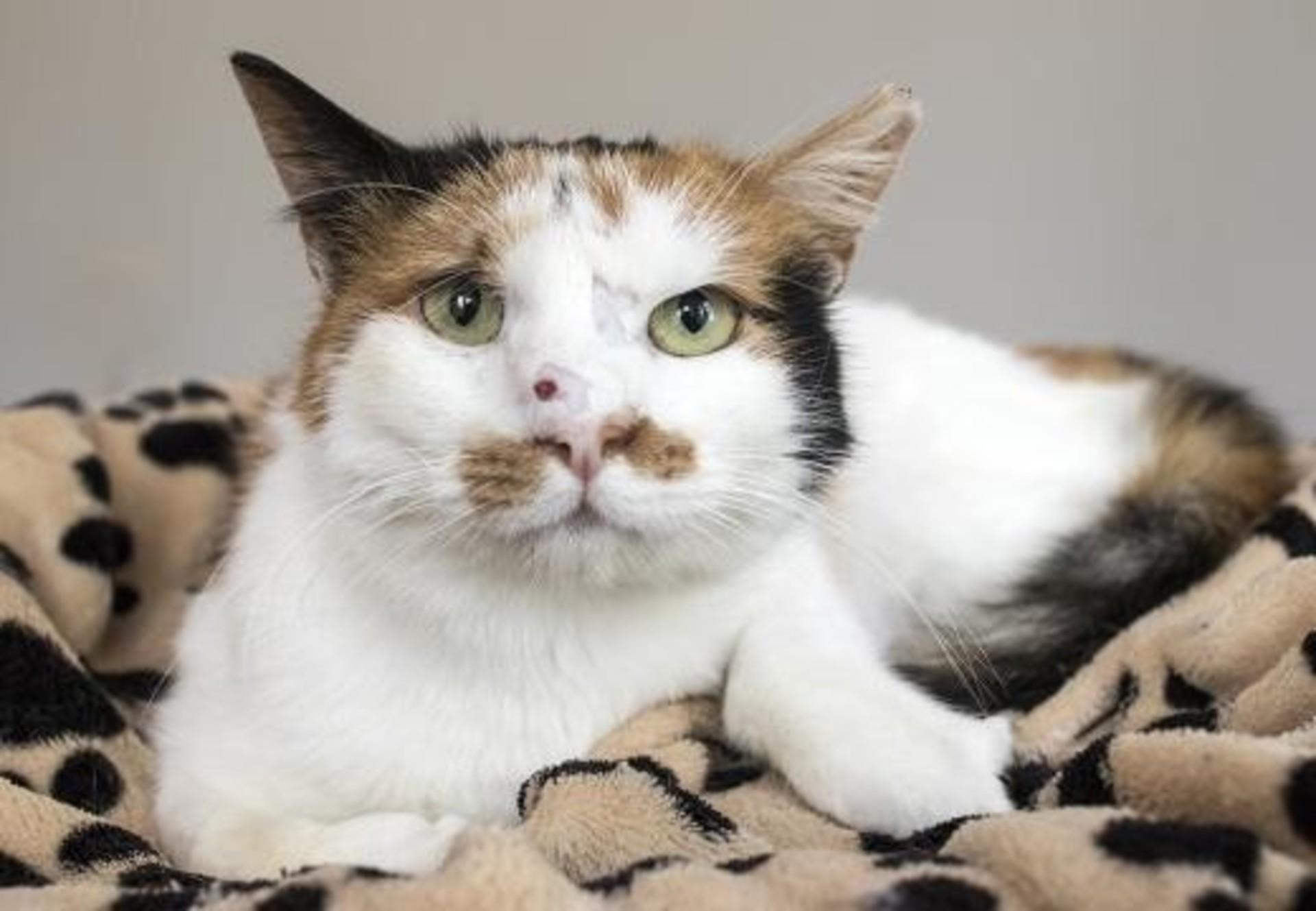 Cat Hope | котка Надежда