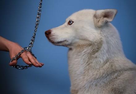 Hund (c) VIER PFOTEN | Mihai Vasile