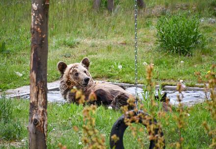 l'ours Dushi à la FORÊT DES OURS de Müritz