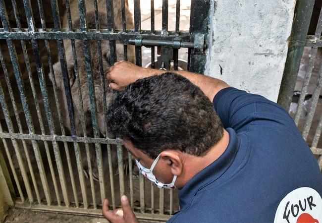 le vétérinaire Amir Khalil s'occupe des animaux