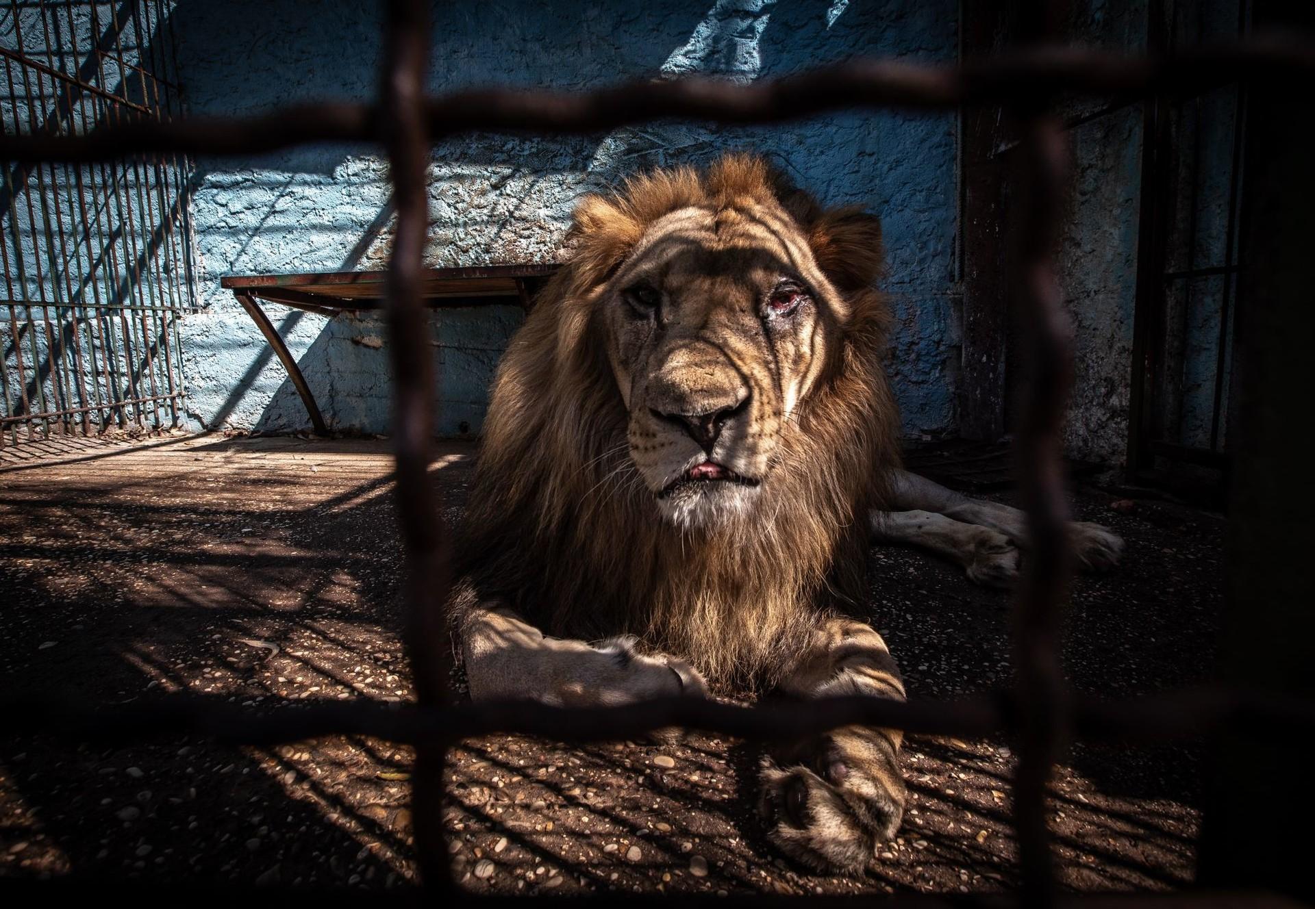 No More Fier Zoo (c) David Wilson