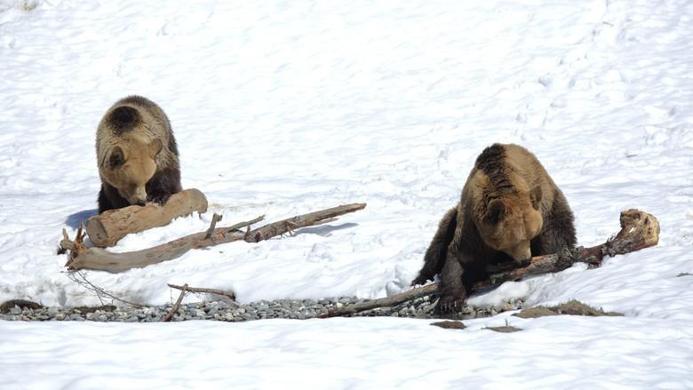 Meimo und Amelia im Winter
