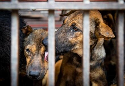 Q&As: End the dog and cat meat trade