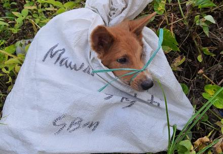 Borneo's secretive dog meat trade