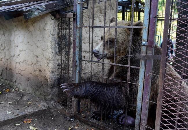Teddy im Zoo Shtip