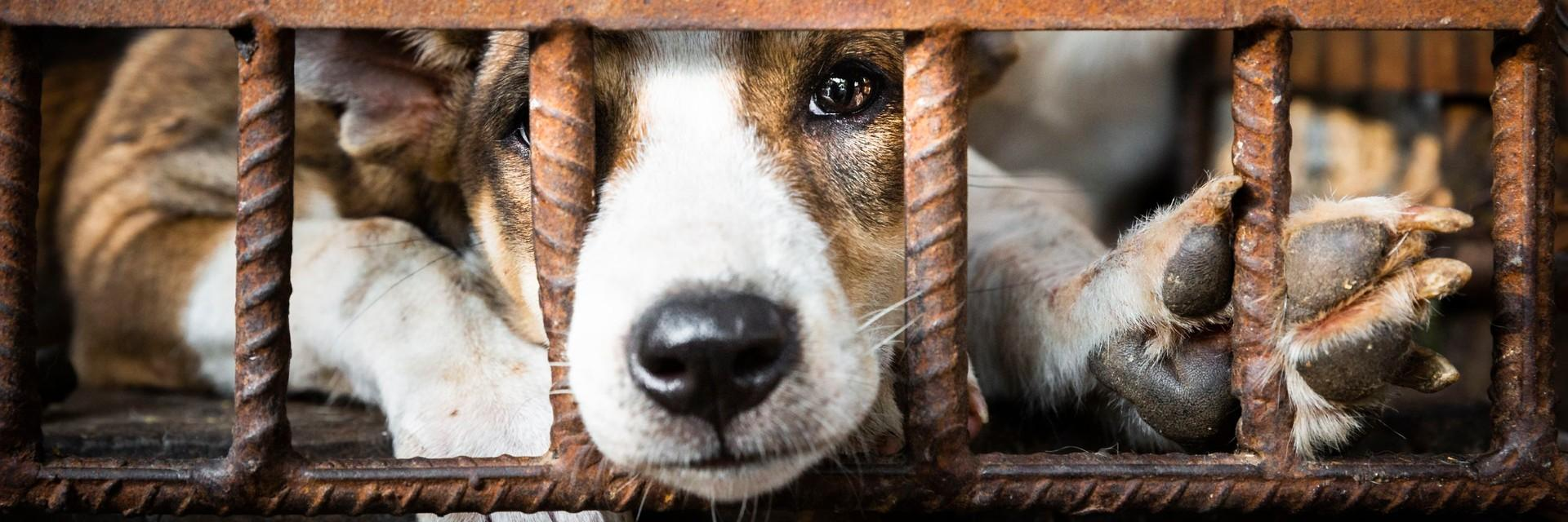 Save Dogs and Cats in Southeast Asia