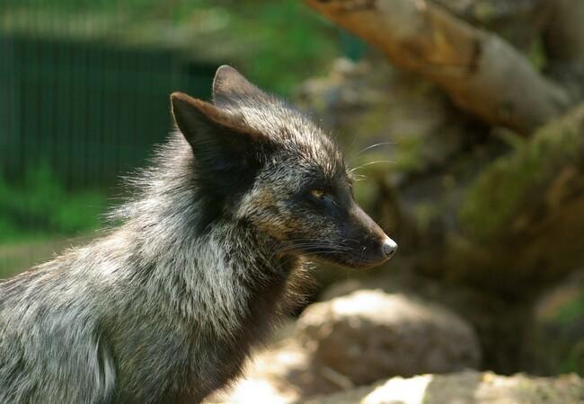 Mika in der TIERART Wildtierstation