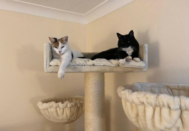 Animal Charity - Two Cats