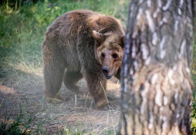 Bear Zoya