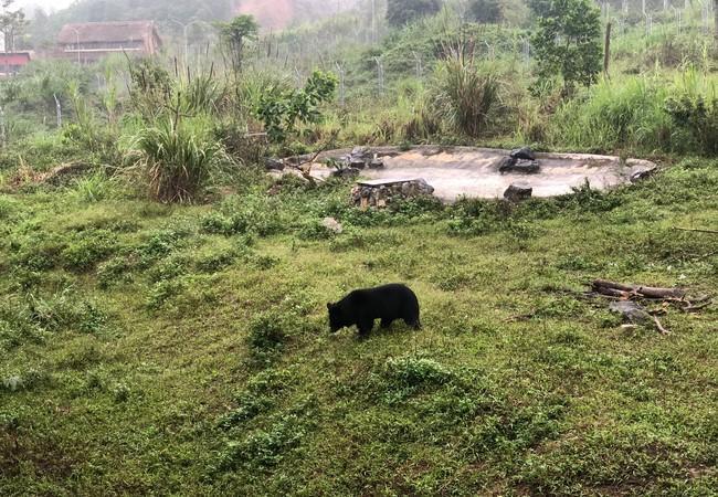 Freddie à la FORÊT DES OURS de Ninh Binh