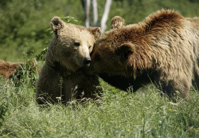 Bears Hana and Anik BEAR SANCTUARY Prishtina.