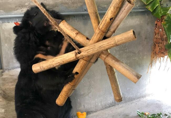 Bärin Thu im Bärenhaus im BÄRENWALD Ninh Binh