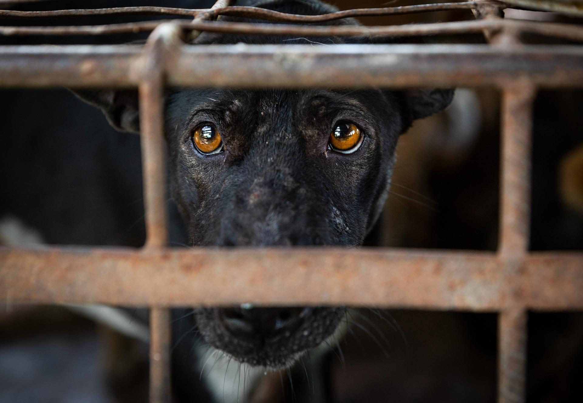 Hond kijkt zielig door tralies van een kooi