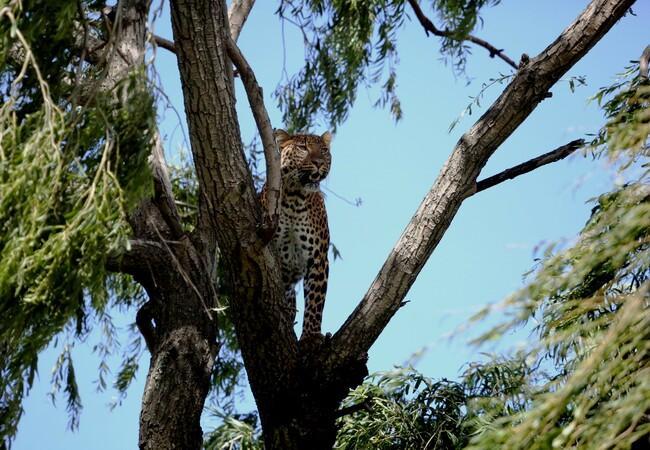 Bakari in the highest treetops