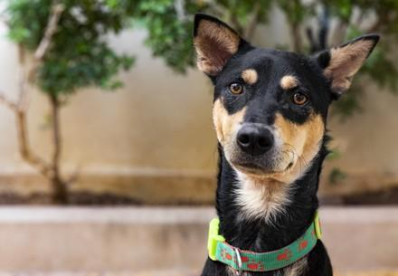 Rescued dog in Southeast Asia