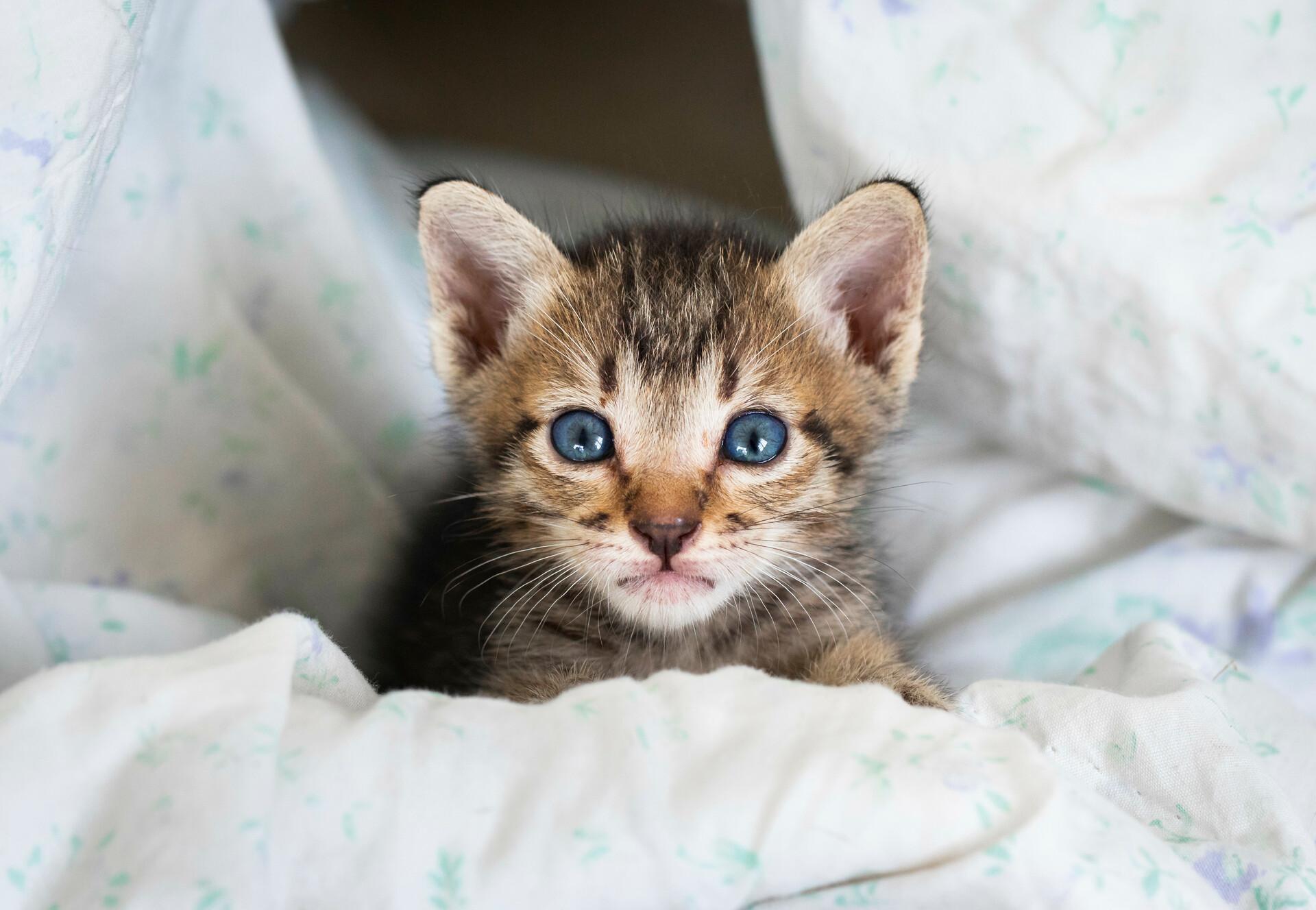 Katzen Junges zum Weltkatzentag