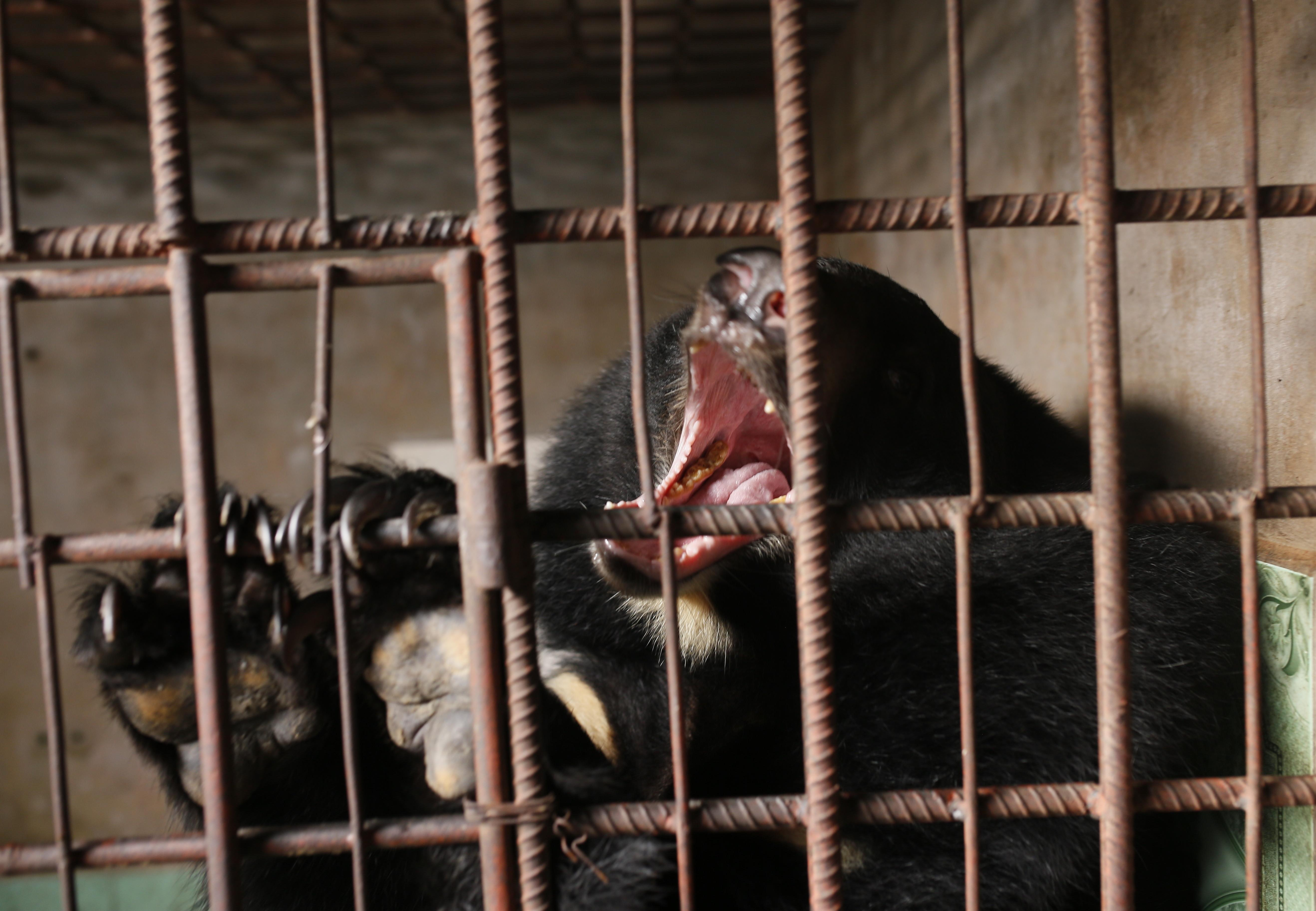 Bär Trang wird gerettet