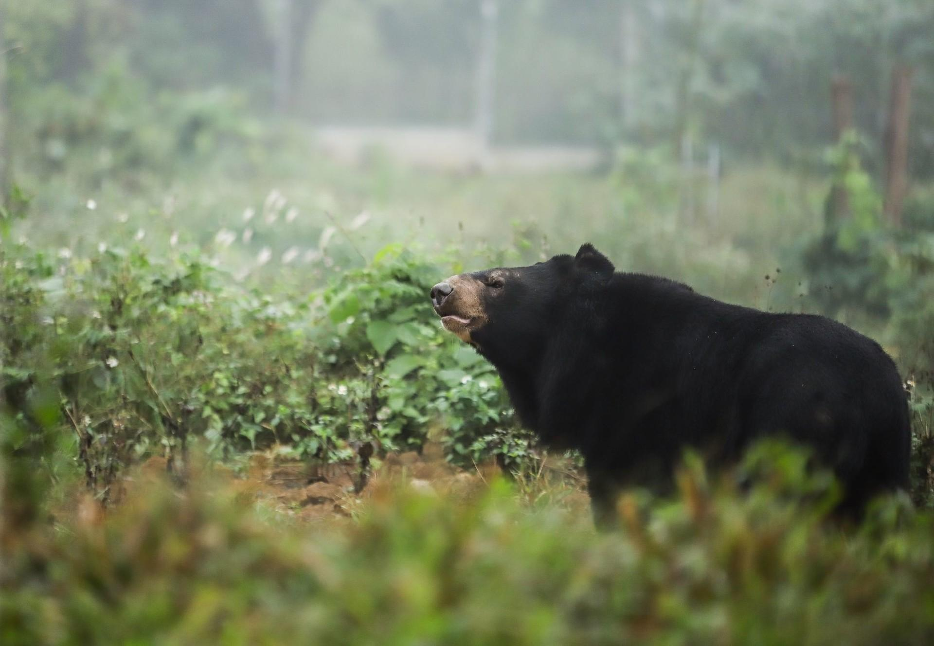 Bear at BEAR SANCTUARY Nihn Binh