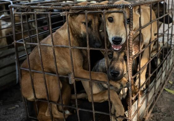 Largest dog meat restaurant in Siem Reap shut down by officials
