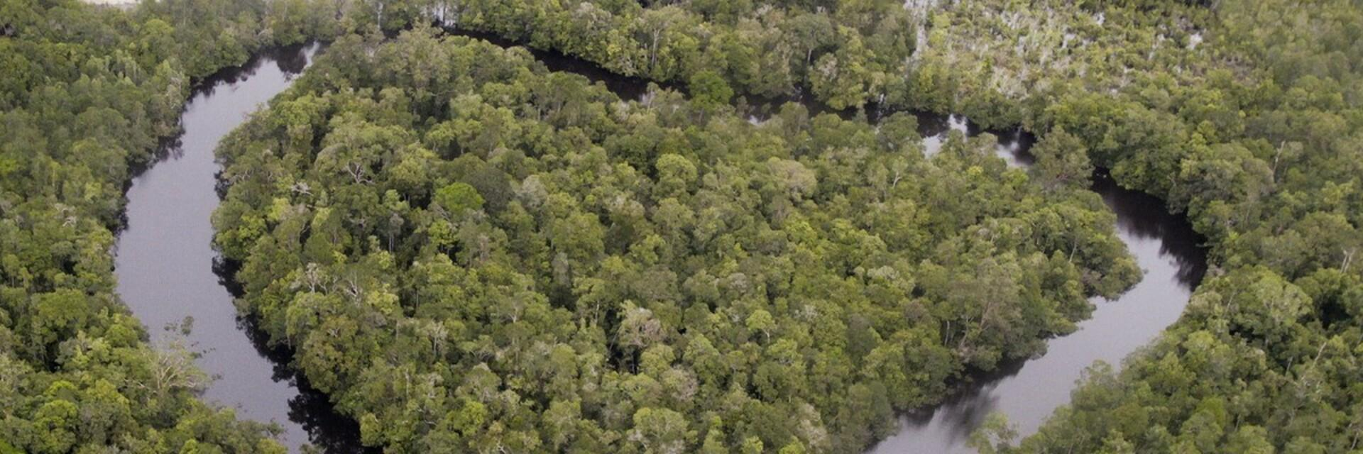 Aerials of Deforestation