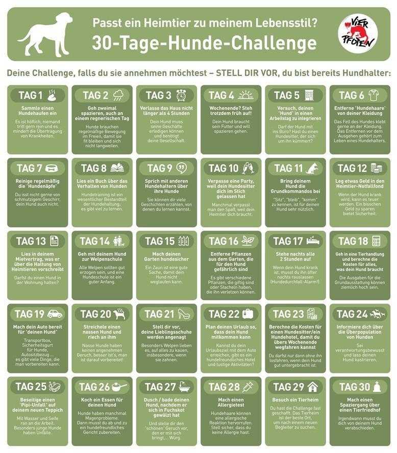 VIER PFOTEN 30-Tage-Challenge Hunde