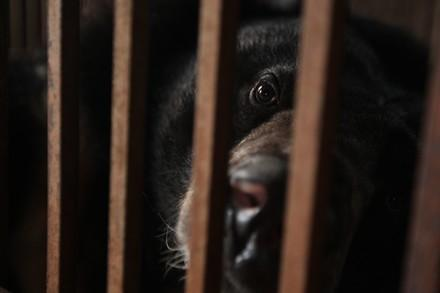 Bile bear looking out of cage