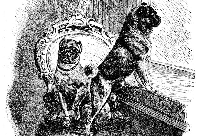 Drawing of Pugs, 1886