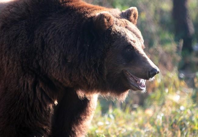 Bear Masha