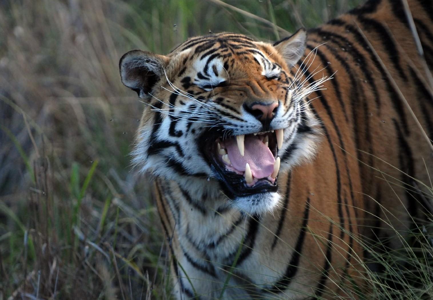 Tiger im VIER PFOTEN Schutzzentrum