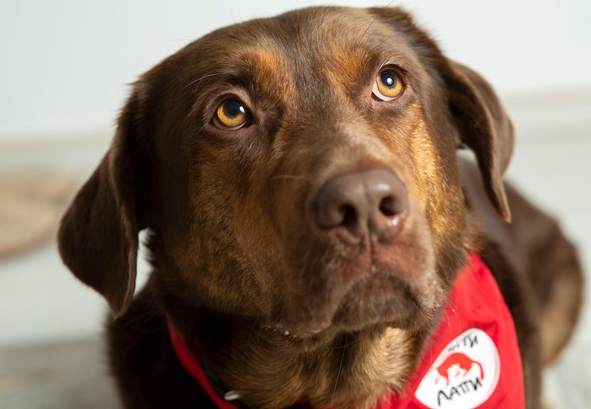 Therapy dog Shoko