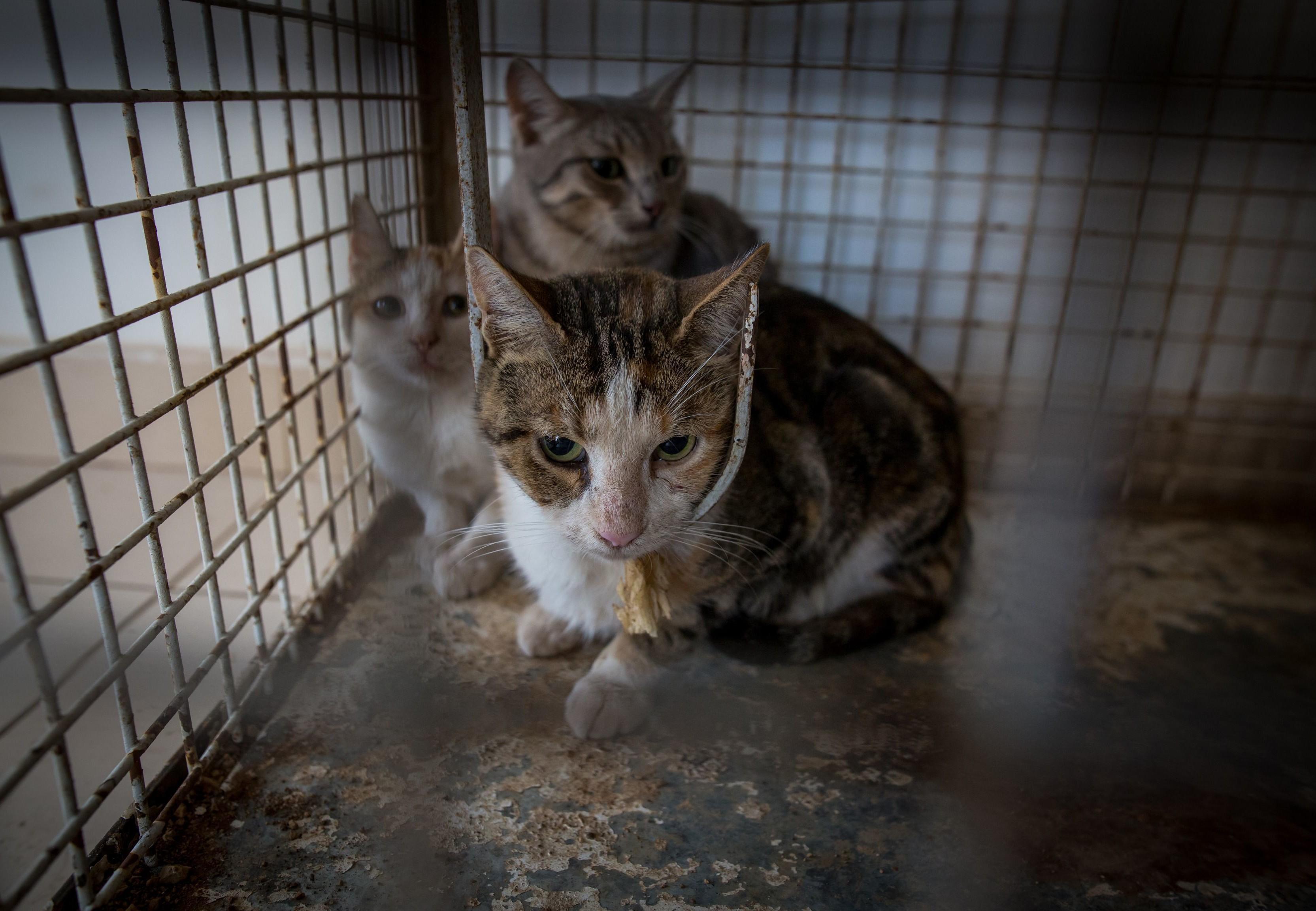 Mishandelde katten