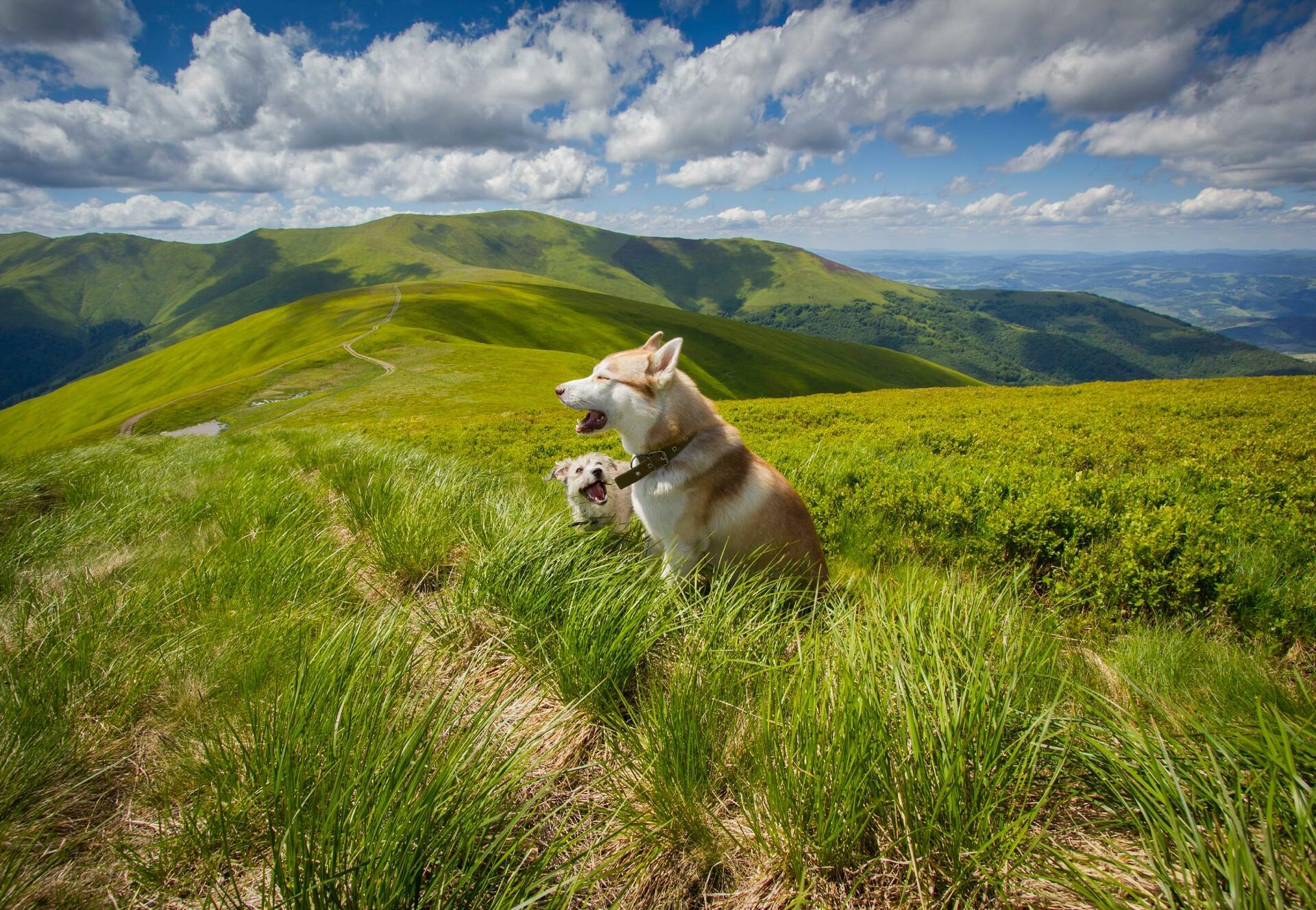 What do dogs enjoy doing on holiday?
