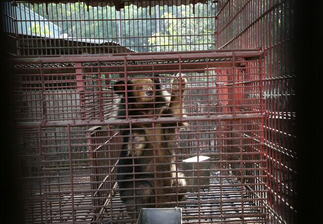 The bears lived in tiny metal cages