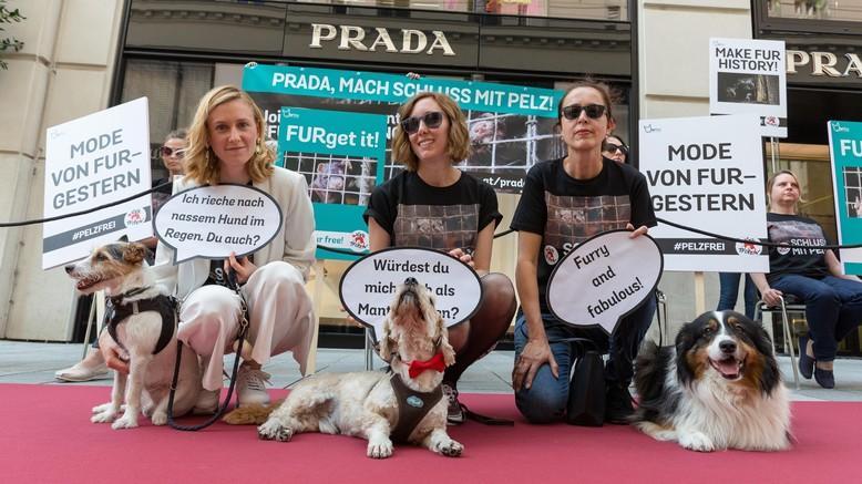 FOUR PAWS and Fur Free Alliance successfully call on luxury fashion brand Prada to go-fur free