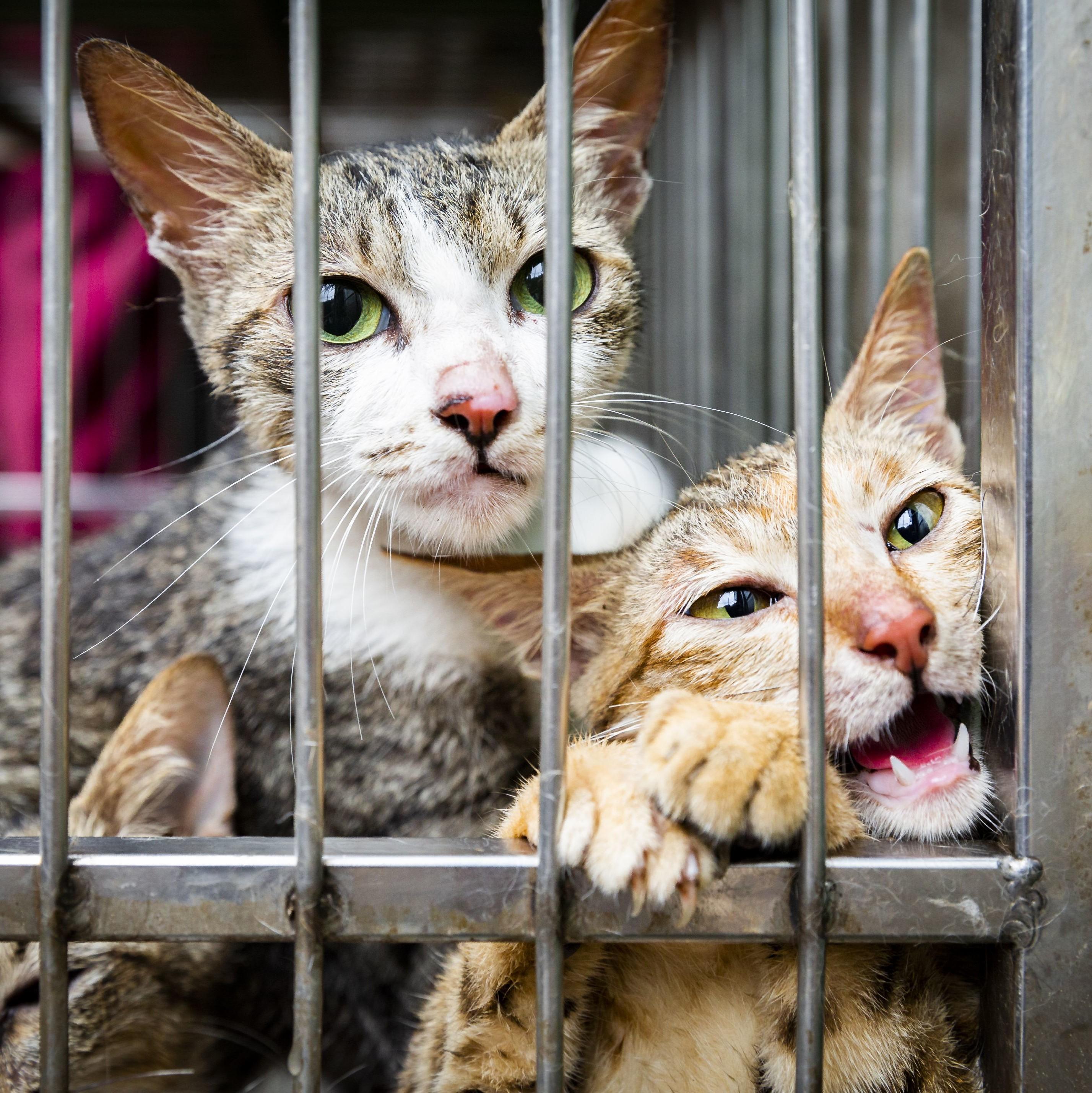 Der Handel mit Katzenfleisch muss aufhören