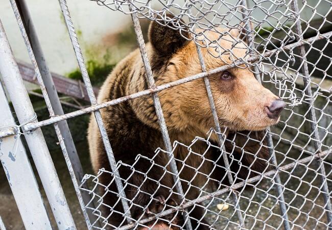 Bären Amelia und Meimo werden gerettet