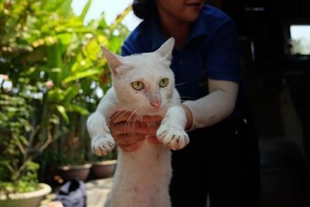 Katze Meow wird gerettet