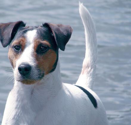 Un chien au bord de l'eau