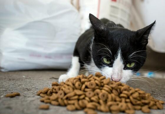Katze Antar wird gefüttert