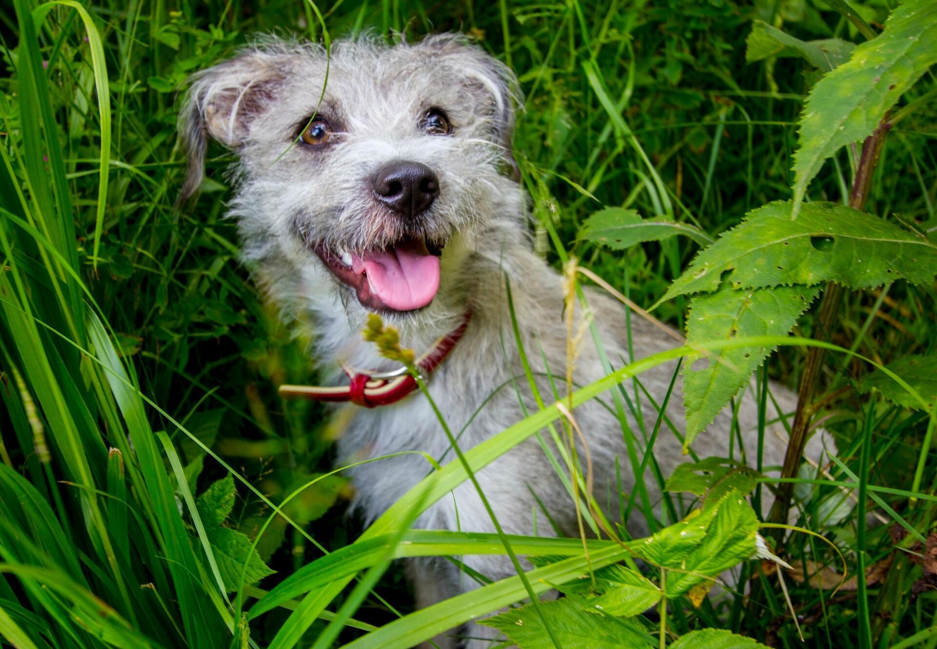 Dog sitting in grassland
