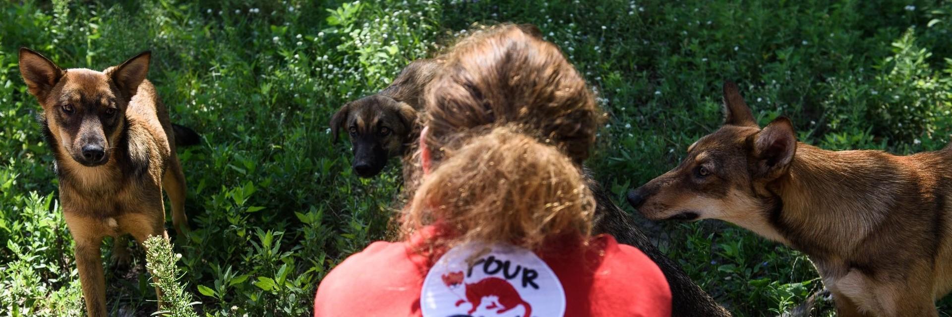 Hilfe für Hunde in der Ukraine