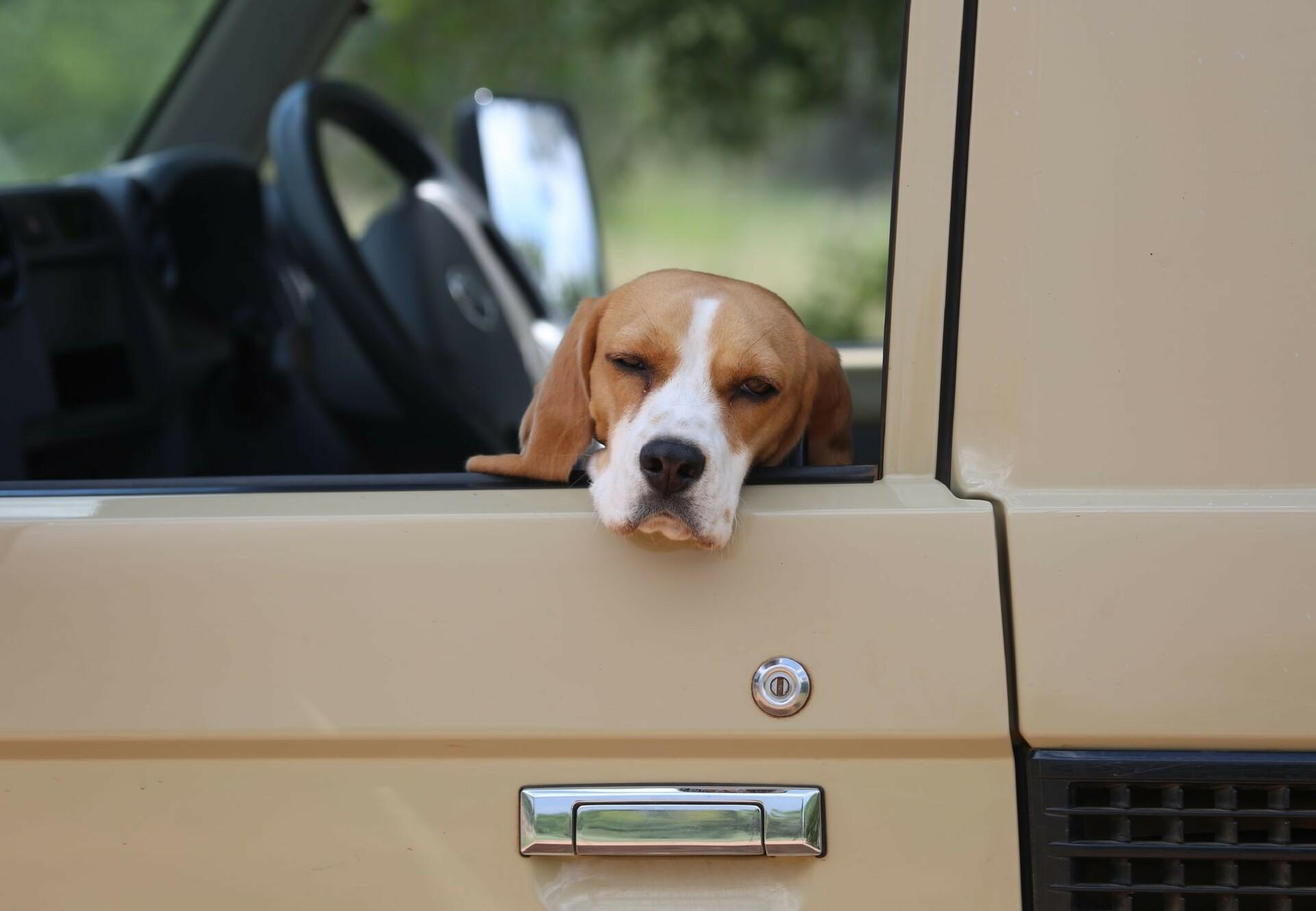 Travelling with your dog by car